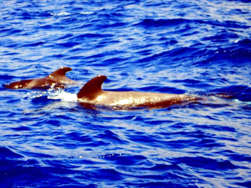 Las Americas, Puerto Colon ter kiti in delfini